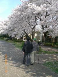 ohanami-walk2.jpg