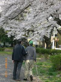 ohanami-walk3.jpg