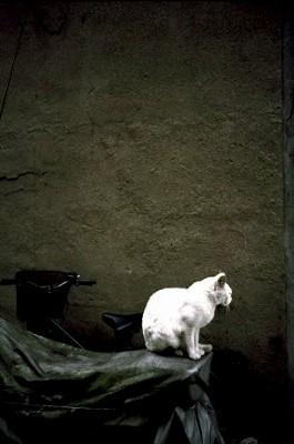 同潤会アパートの猫