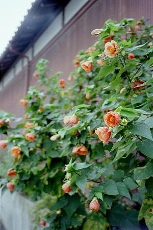 路地裏の花