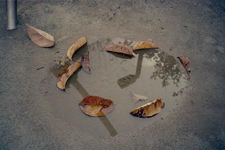 水溜まりに落ち葉