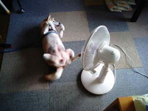 たまらん涼しいで!