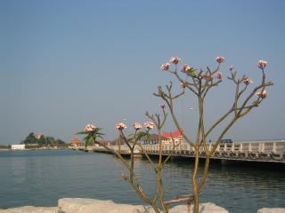 thailand 290