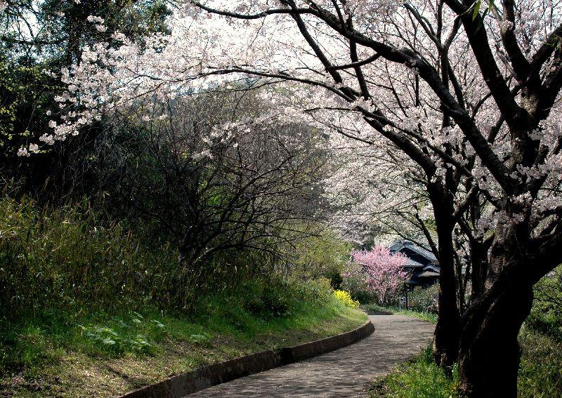 粟島散歩 115