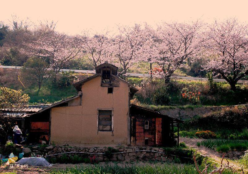 タバコ乾燥小屋4