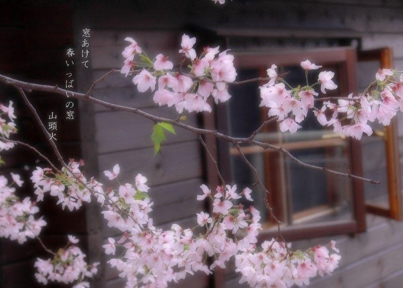キャビンの桜