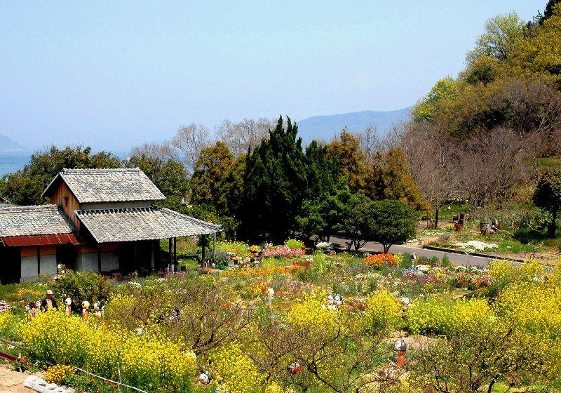 悦ちゃんの花畑2