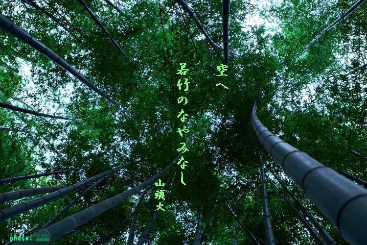 空へ若竹の
