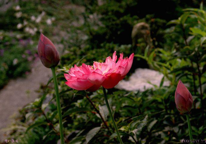 粟島の庭4