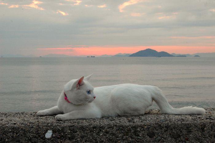 西浜の夕景 067