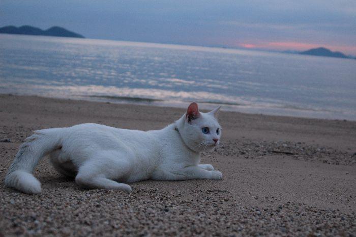 西浜の夕景 078