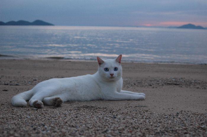 西浜の夕景 081