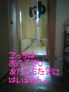 Uae0uL00.jpg