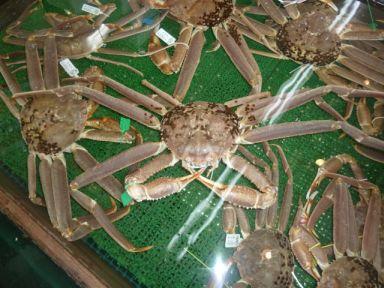 タグ付きの松葉蟹 身が詰まってます!!1,300円也