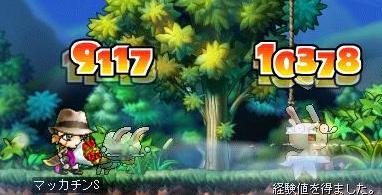Maple6713a.jpg