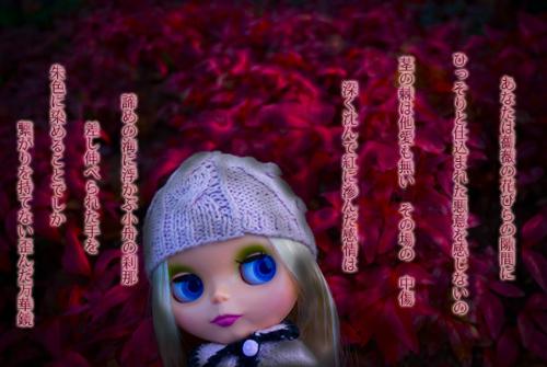 赤赤花*花