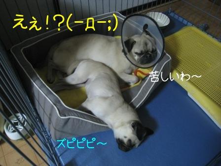 3_20090917140202.jpg