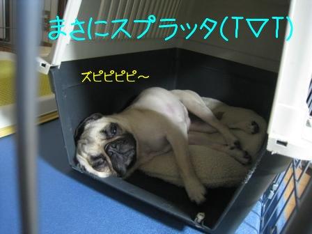 4_20090917140202.jpg