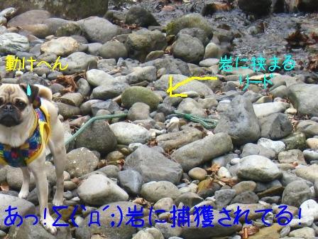 4_20090929094959.jpg