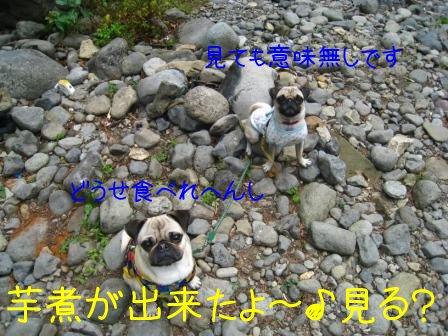 9_20090929095020.jpg