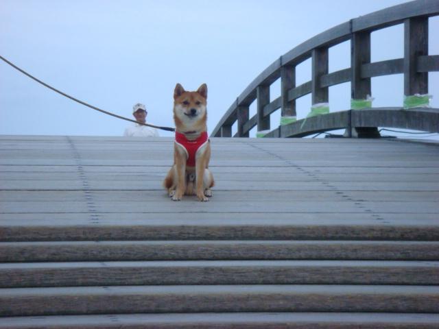 橋の上での僕じゃよ