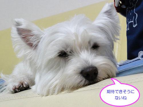 10_20110326210015.jpg