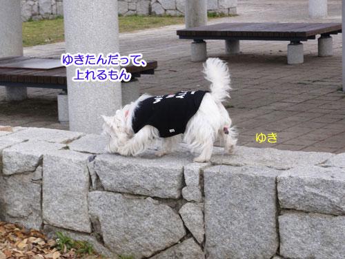 12_20110327222759.jpg