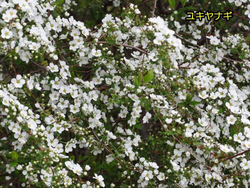 DSC01325.jpg