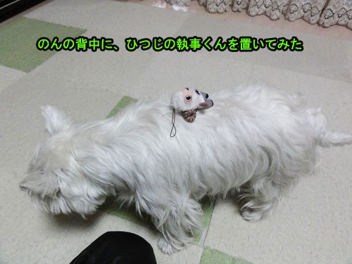 DSC01833_20110426215935.jpg