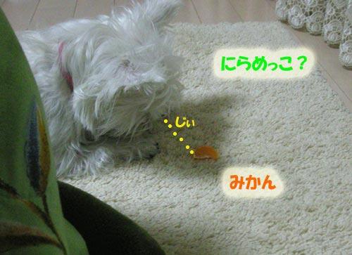 DSCN3691.jpg