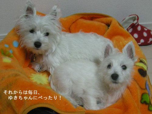 DSCN4043_20110109232732.jpg