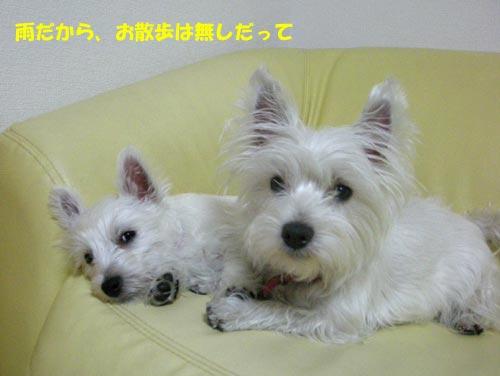 DSCN4279.jpg
