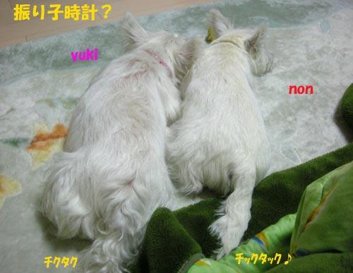 DSCN4676.jpg