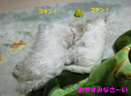 DSCN4677.jpg