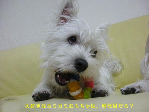 DSCN4757_20110207224148.jpg