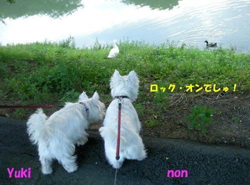 DSCN6142.jpg