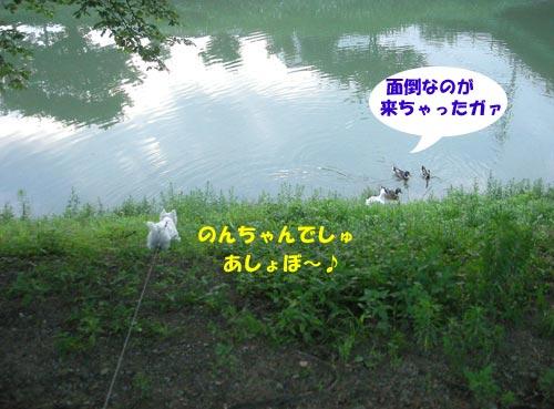 DSCN6144.jpg