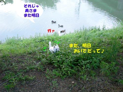 DSCN6146s.jpg