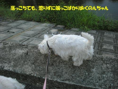 DSCN6419.jpg