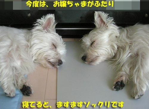 DSCN6601.jpg