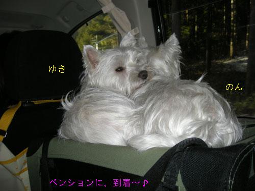 DSCN6993.jpg