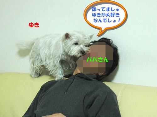 DSC_0001_20101201192928.jpg