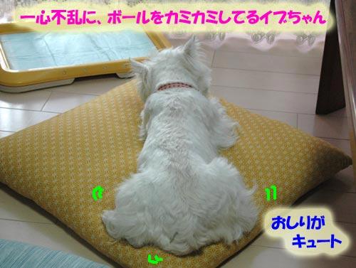 DSC_0002_20100626182705.jpg