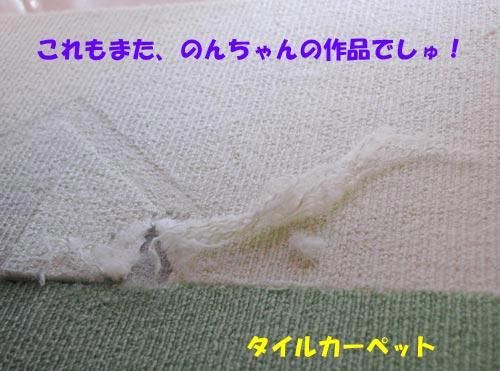 DSC_0002_20100811214519.jpg
