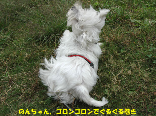 DSC_0002_20101027215817.jpg