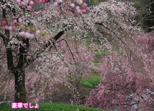 DSC_0005_20110504191729.jpg