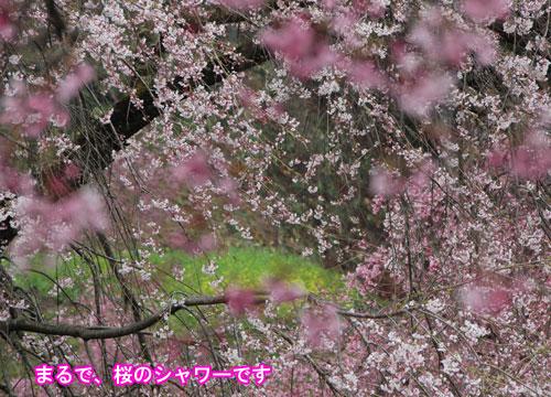 DSC_0006_20110504191729.jpg