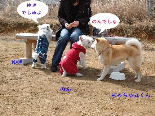 DSC_0011_20110210194145.jpg