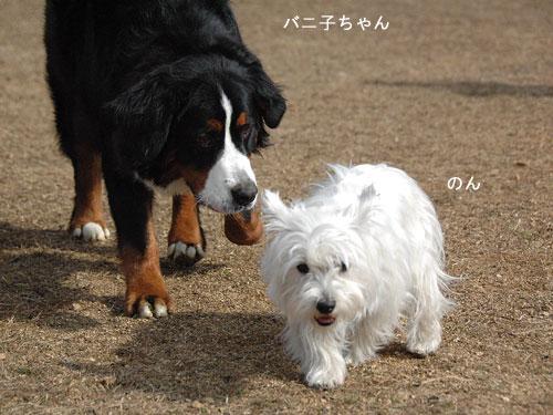 DSC_0013_20110210194145.jpg