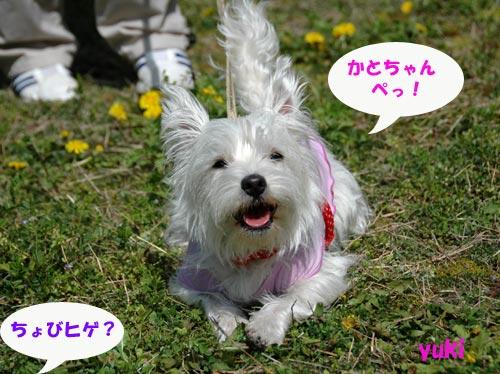 DSC_0015_20100404205717.jpg